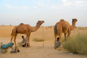 camel safari desert india 11