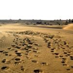 camel safari desert india 18