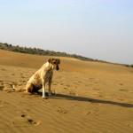camel safari desert india 20