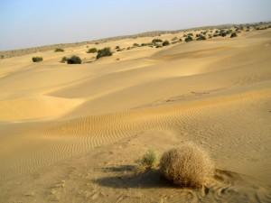 camel safari desert india 21
