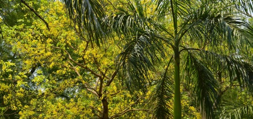copac india